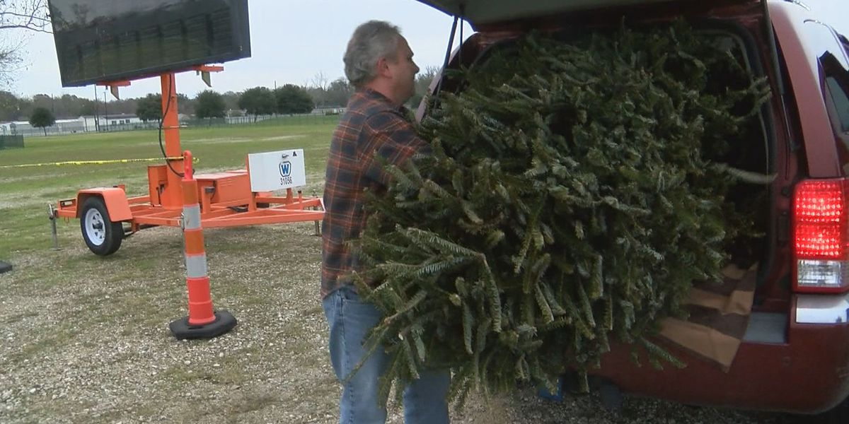 How you can help Louisiana's wetlands with your old Christmas tree