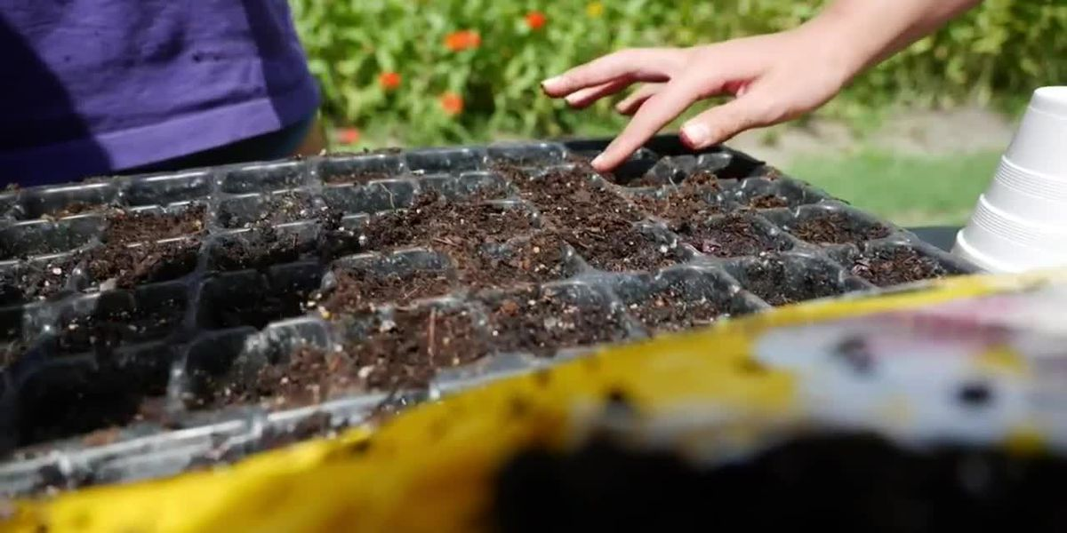 Get It Growing: Summer planting for fall crops