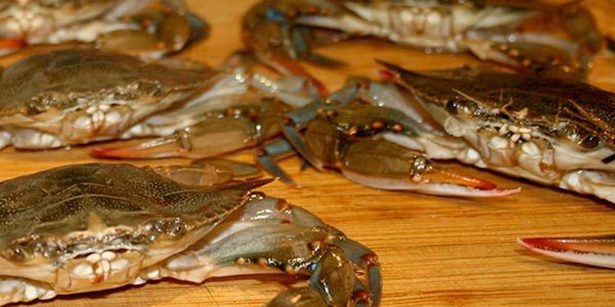 Blue crab season to reopen in La. following 30-day closure