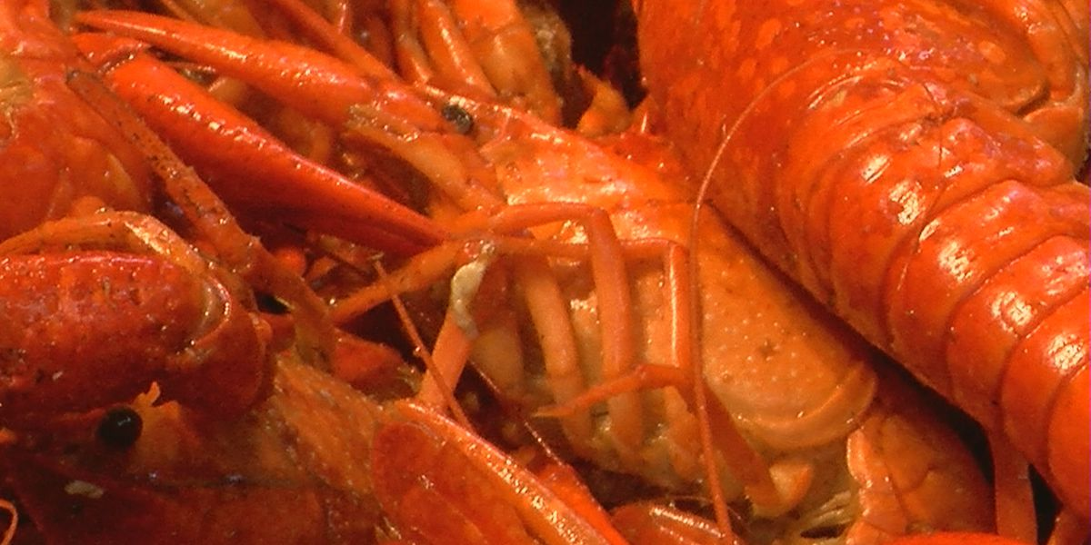 Where to get mudbugs on National Crawfish Day