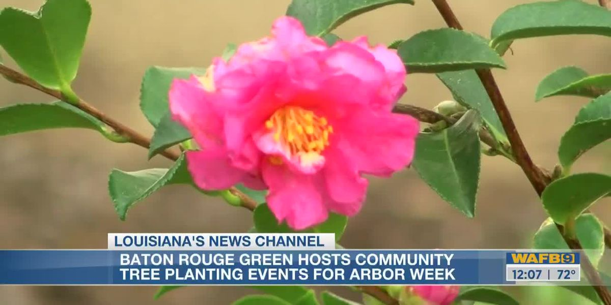 Baton Rouge Green celebrates arbor day with tree-planting at main library