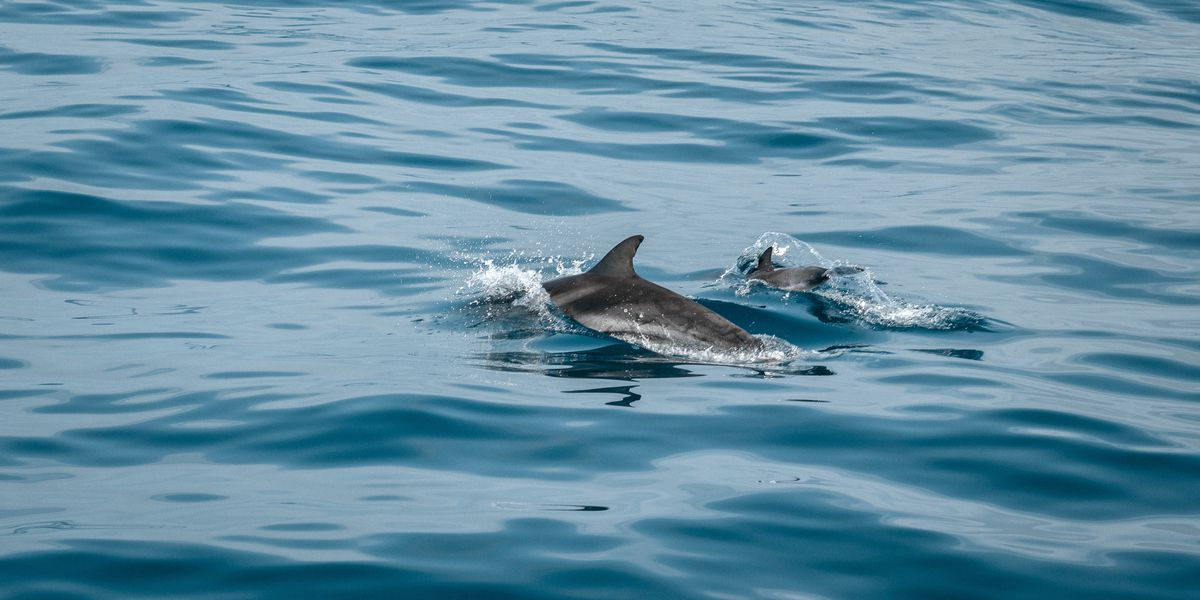 NOAA: 279 dolphins dead on Gulf Coast, triple usual number