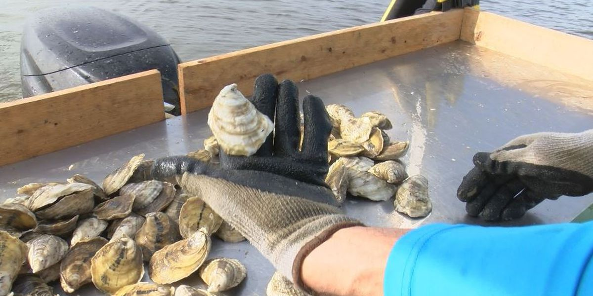 Oyster fishermen sue feds over opening of Bonnet Carre Spillway