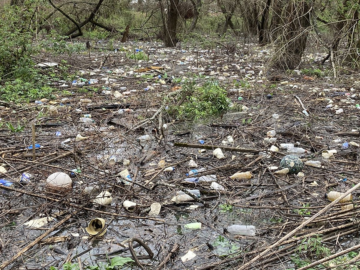 Baton Rouge's dirty secret: 81 tons of litter in wetlands behind LSU's Burden Center