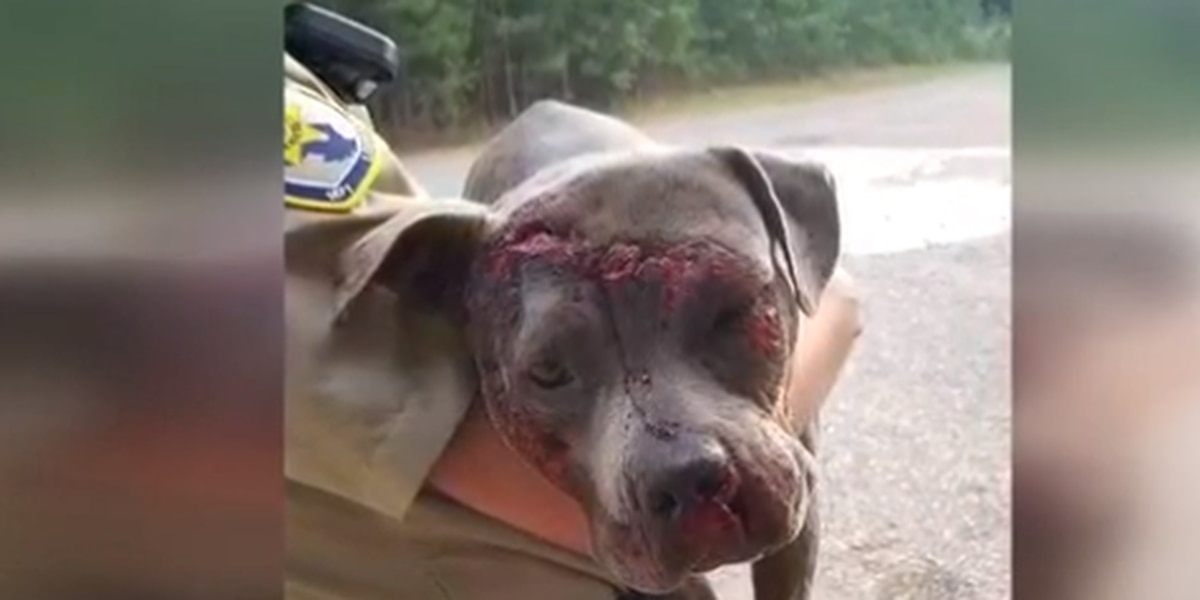 GRAPHIC: Dog thrown out on I-20, dragged by cars; $2,500 reward offered