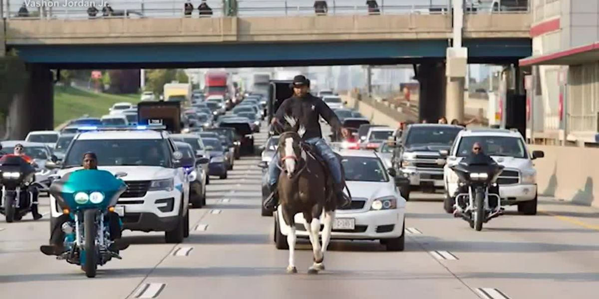Horse rider arrested at Chicago protest