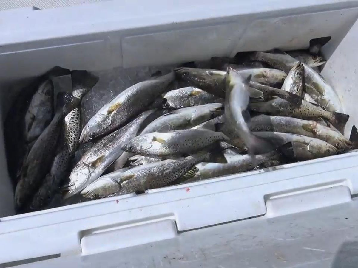 LDWF to consider modifying size, bag limits for speckled trout during Oct. 1 commission meeting