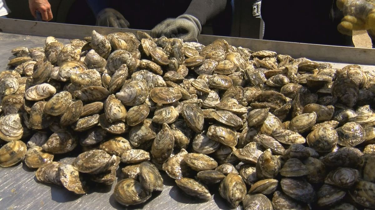 Oyster Task meets to discuss dying oysters