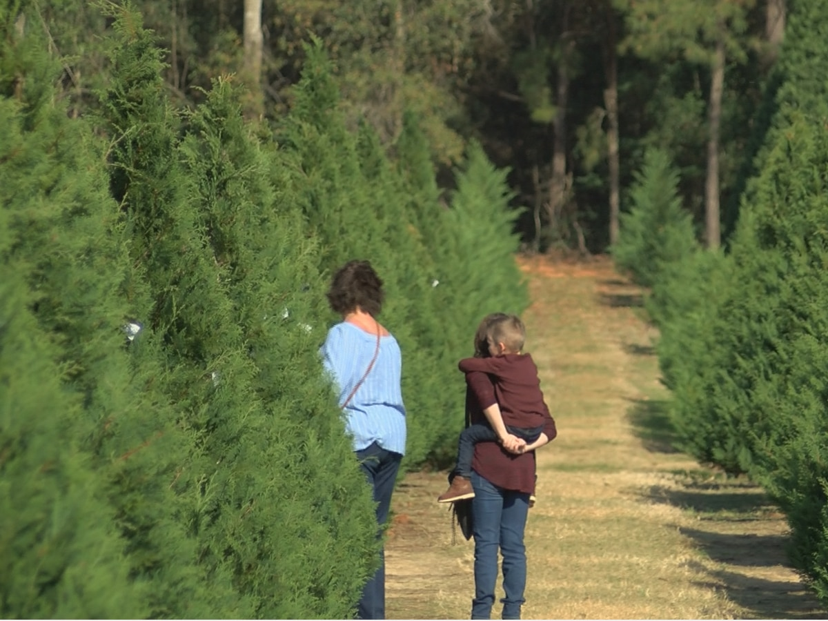 National Christmas tree shortage affecting prices