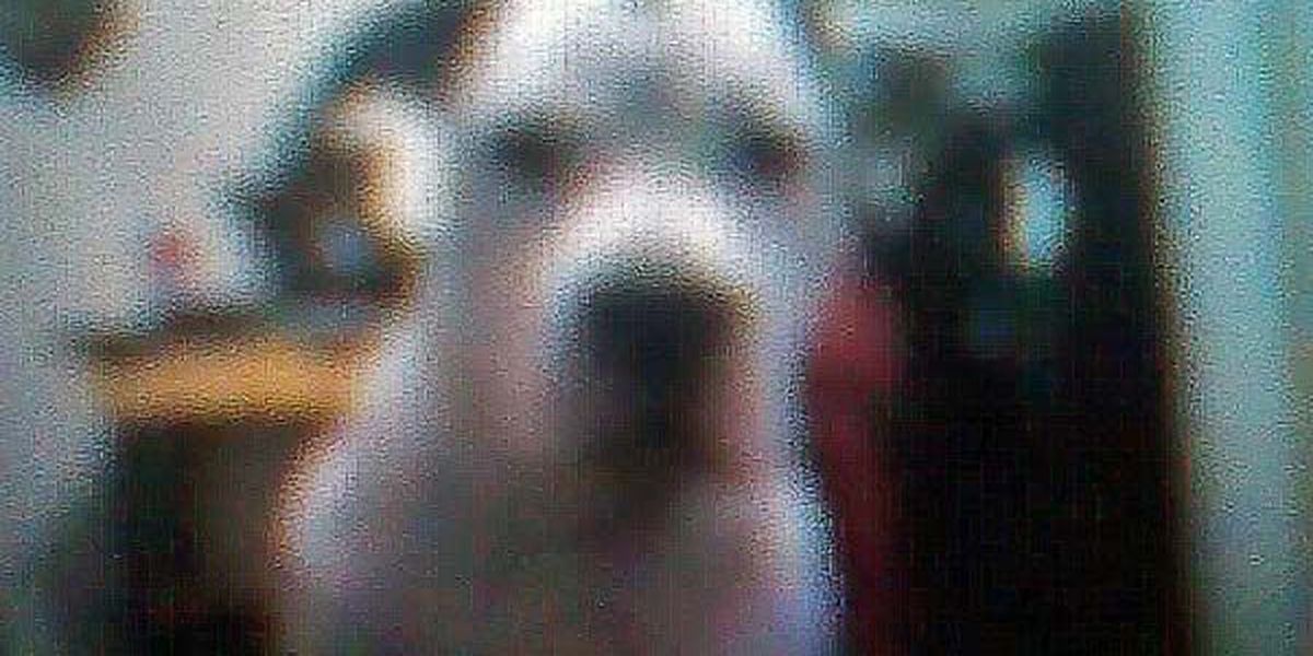 Police shot family dog during counterfeit money investigation