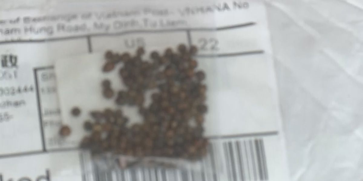 USDA identifies mysterious, unsolicited seeds from China