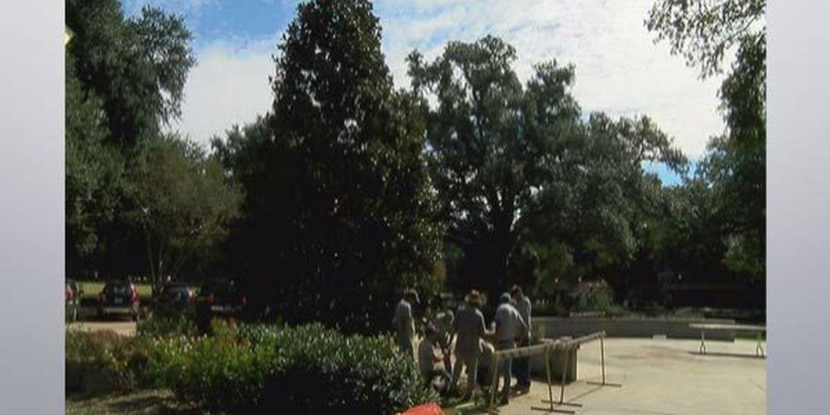 LSU plants its own Christmas tree