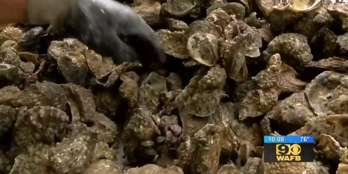 La. seafood industry takes hit after high amounts of fresh water threaten wildlife
