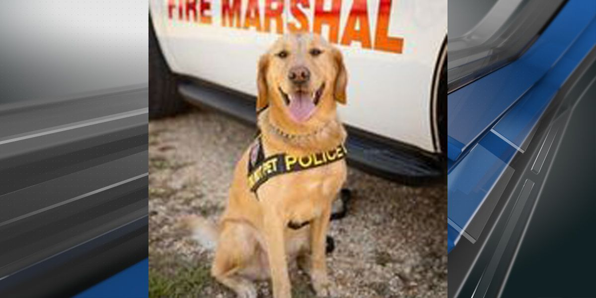 State Fire Marshal K-9 Monty retires after nearly a decade of service