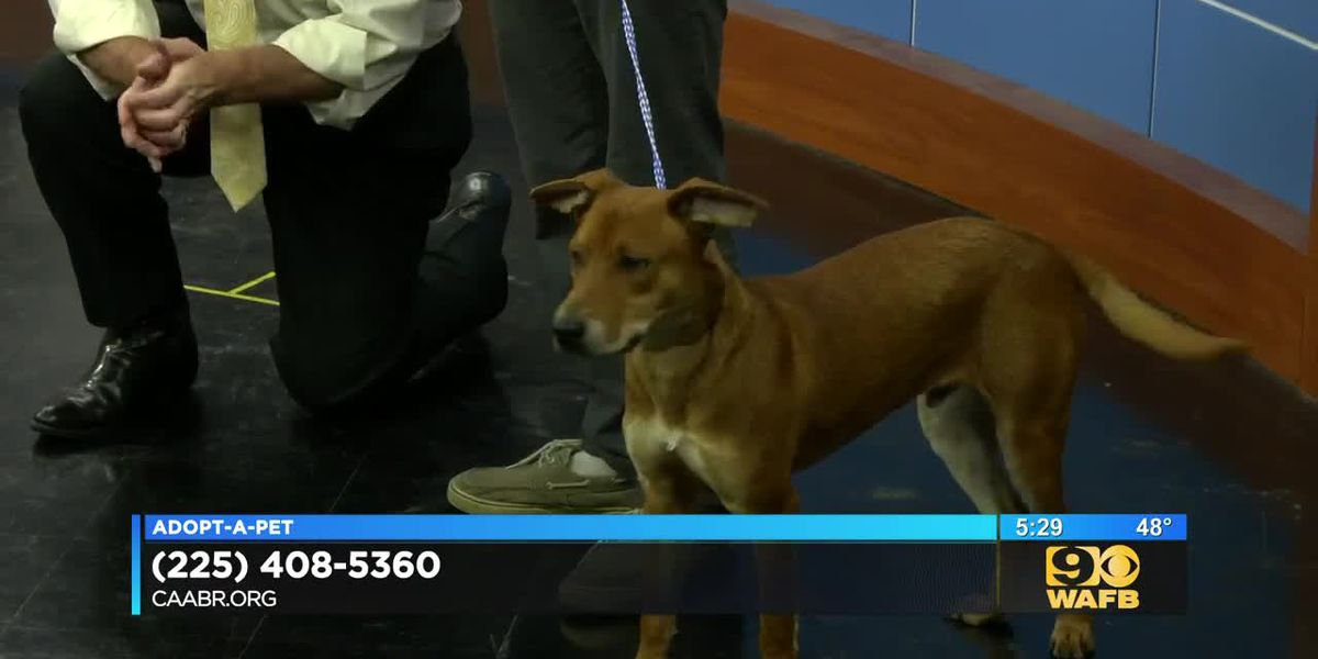 Adopt-A-Pet: Colo is up for adoption!