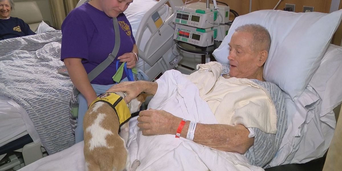 Furry visitors bring healing, happiness to cancer patients for the holidays