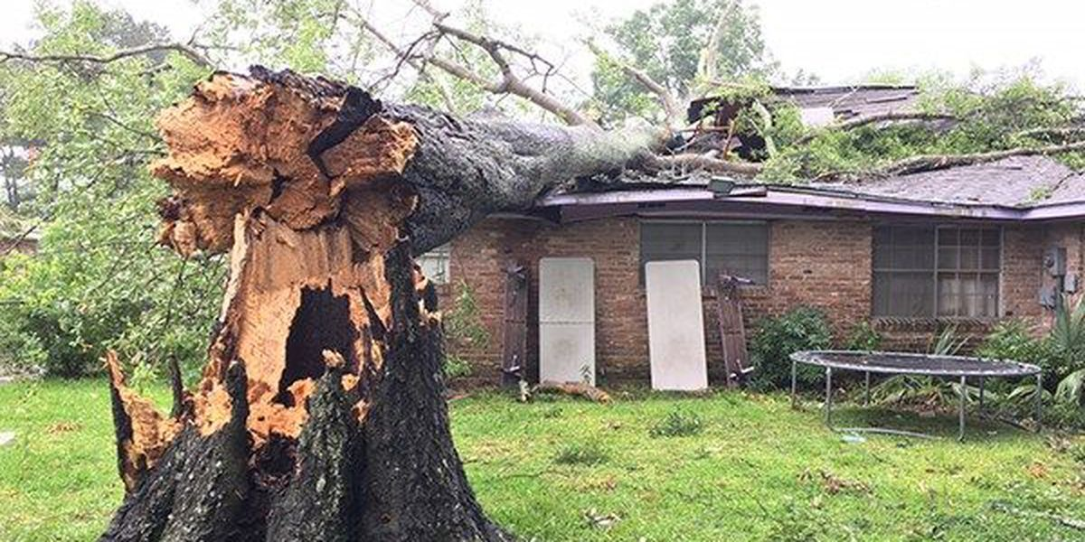 Tree falls on home, pinning woman's son