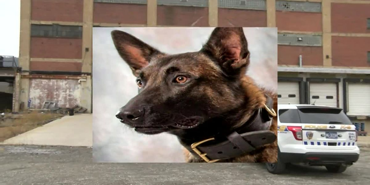 Police dog dies after falling down elevator shaft during search for burglary suspects