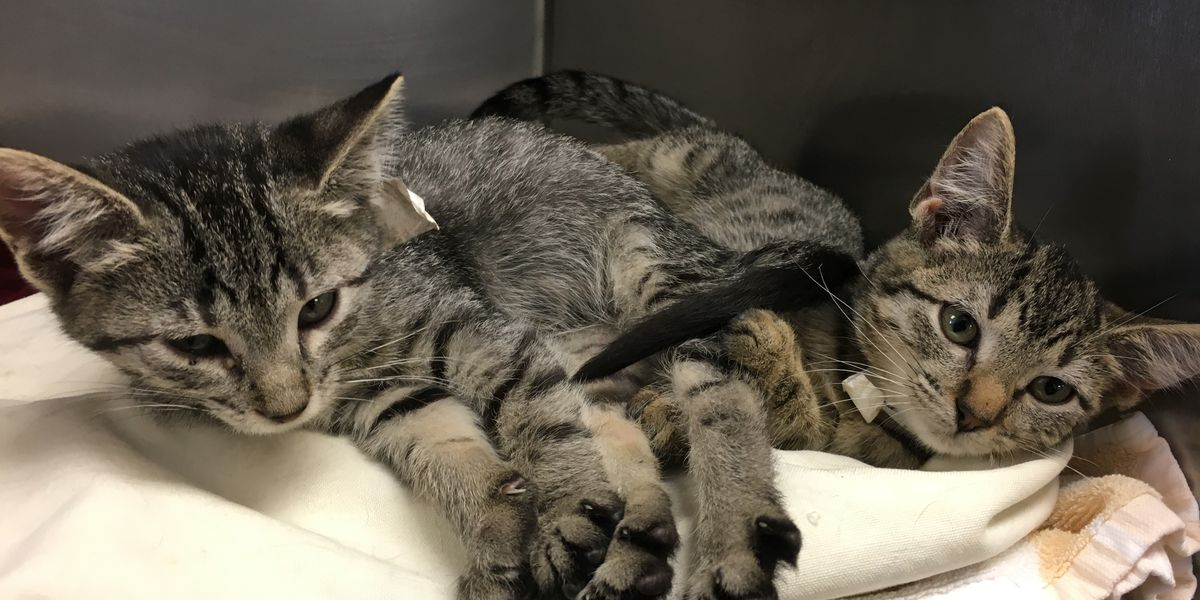 30 cats from Louisiana shelter brought to Richmond