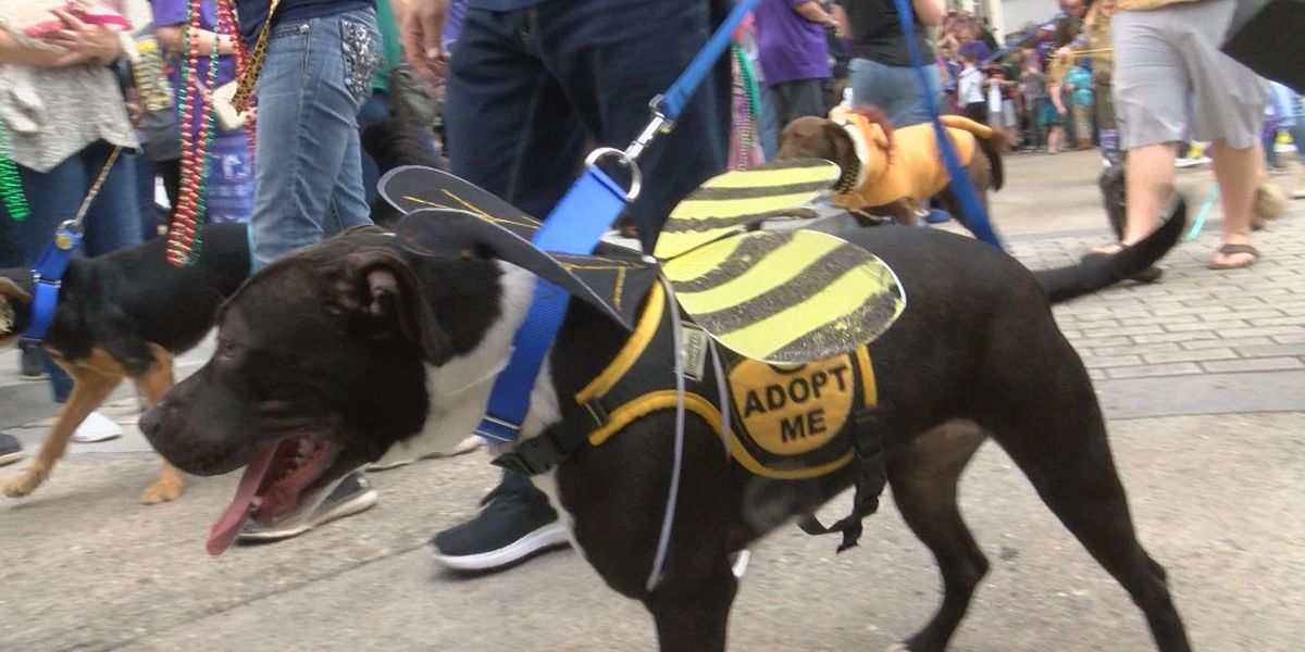 Krewe of Mutts brings in big crowd