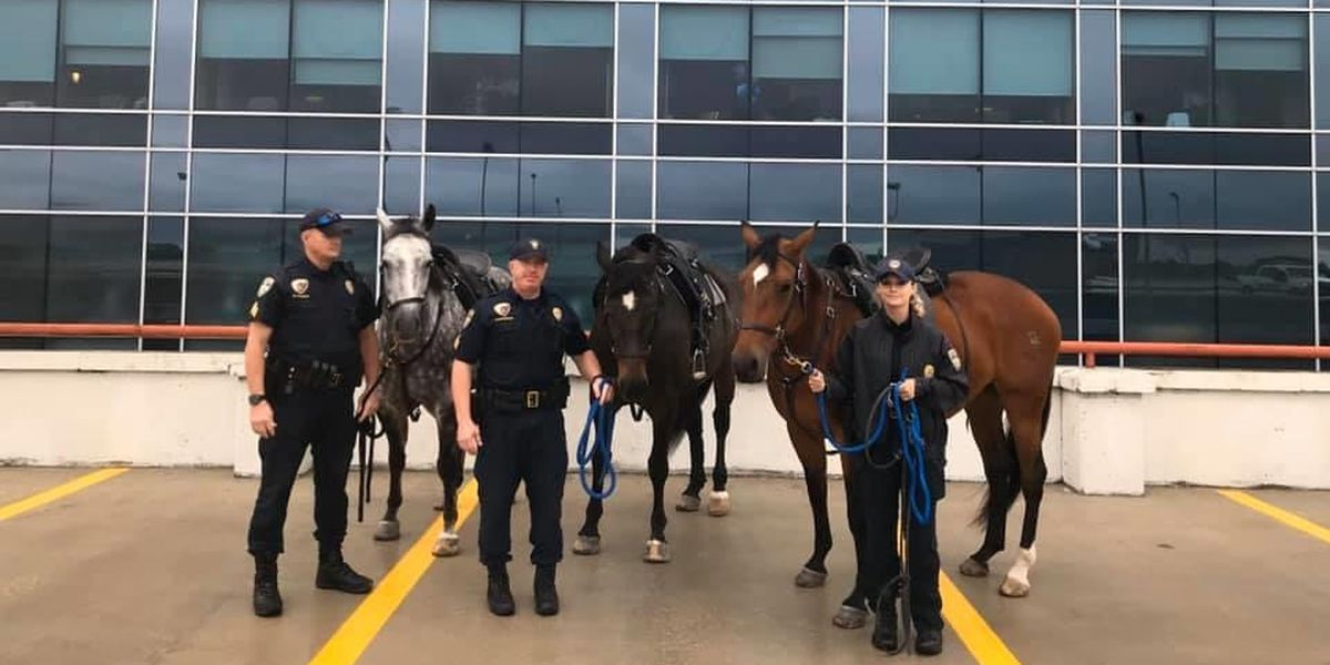 BRPD's mounted patrol visits hospital to say hello to officer injured in shooting