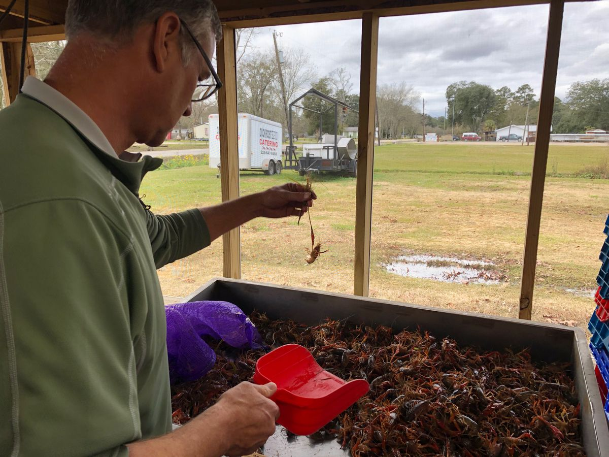 Crawfish make early appearance at Ascension Parish restaurants