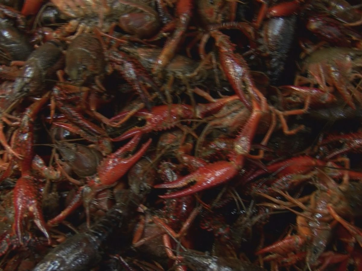 Louisiana seafood labeling bill clears hurdle