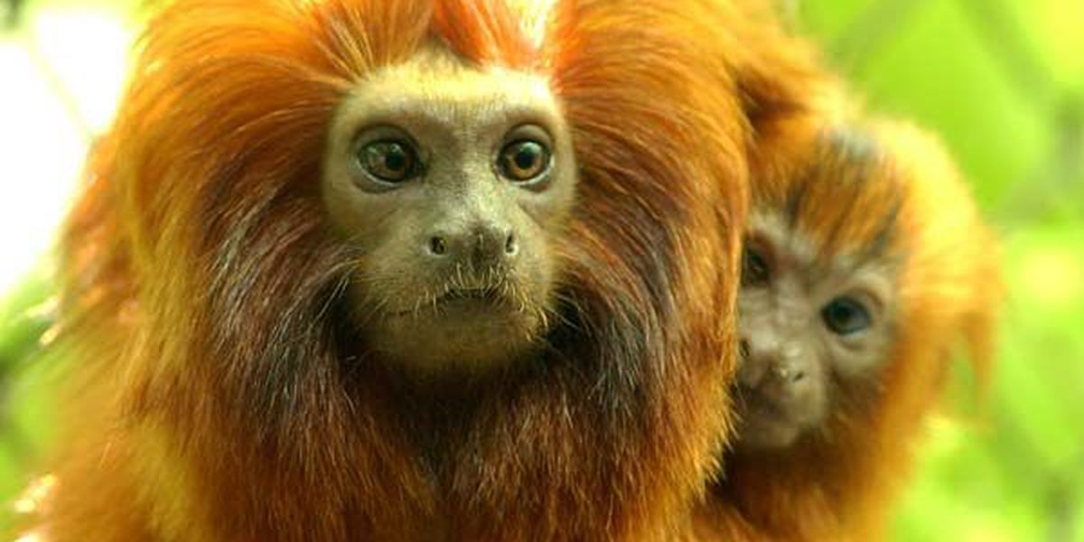 Outside experts say BREC Zoo not at fault for high profile animals deaths