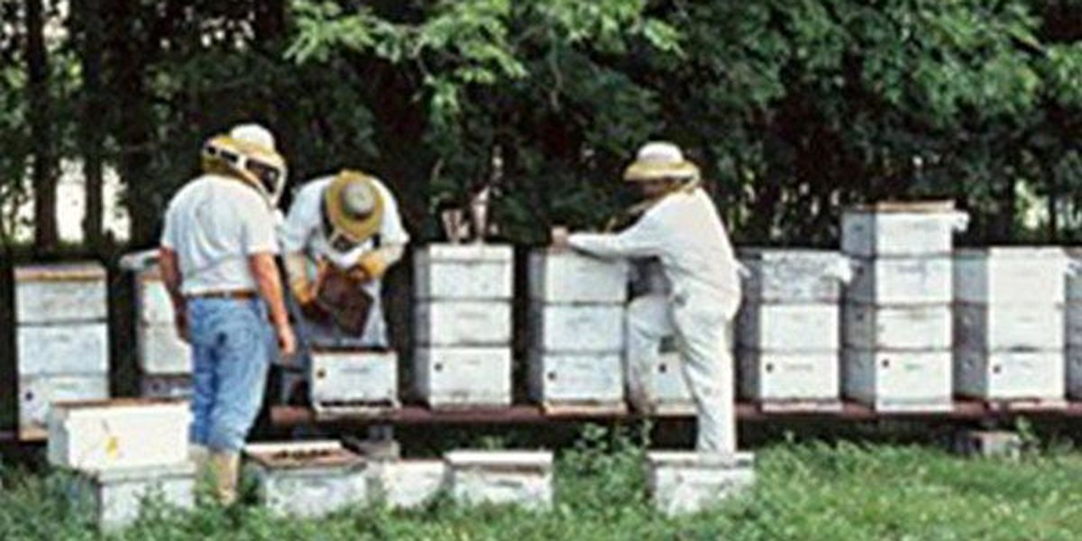 Honey bees provide therapeutic opportunity for veterans