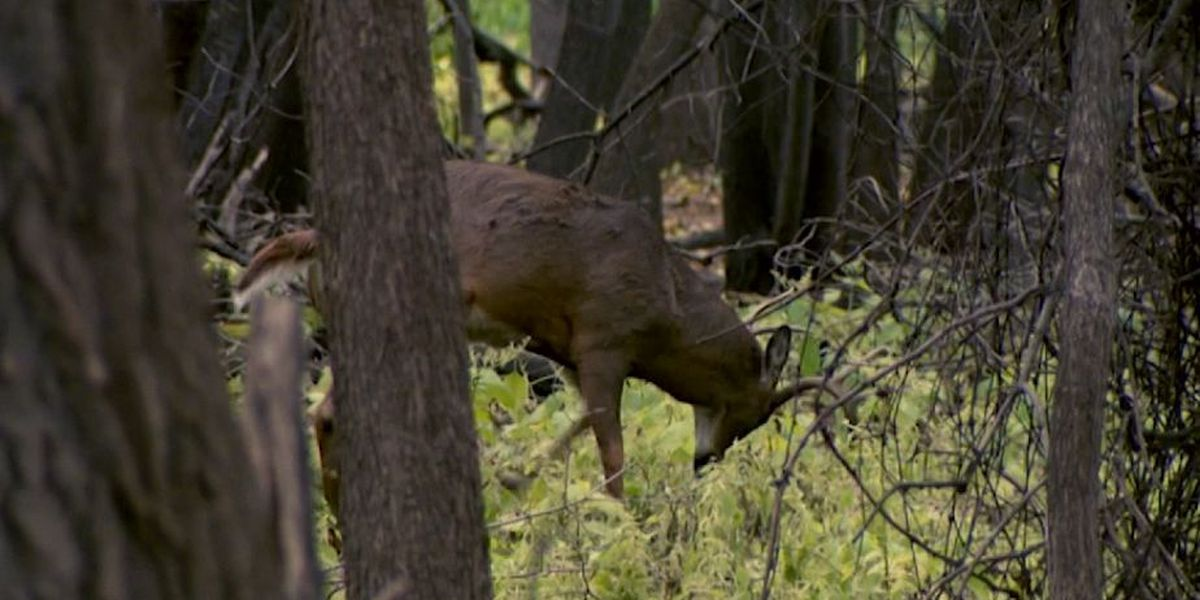 New system allows hunters to test harvested deer for chronic wasting disease