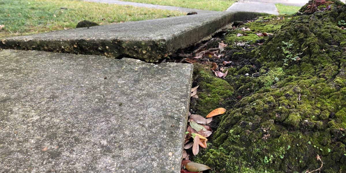 ACTION JACKSON: Homeowners say city officials neglecting dangerous sidewalks