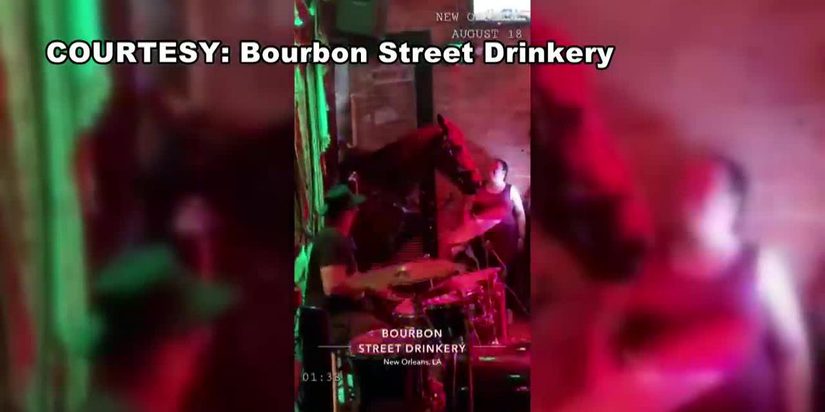 Horse literally walks into a bar on Bourbon Street