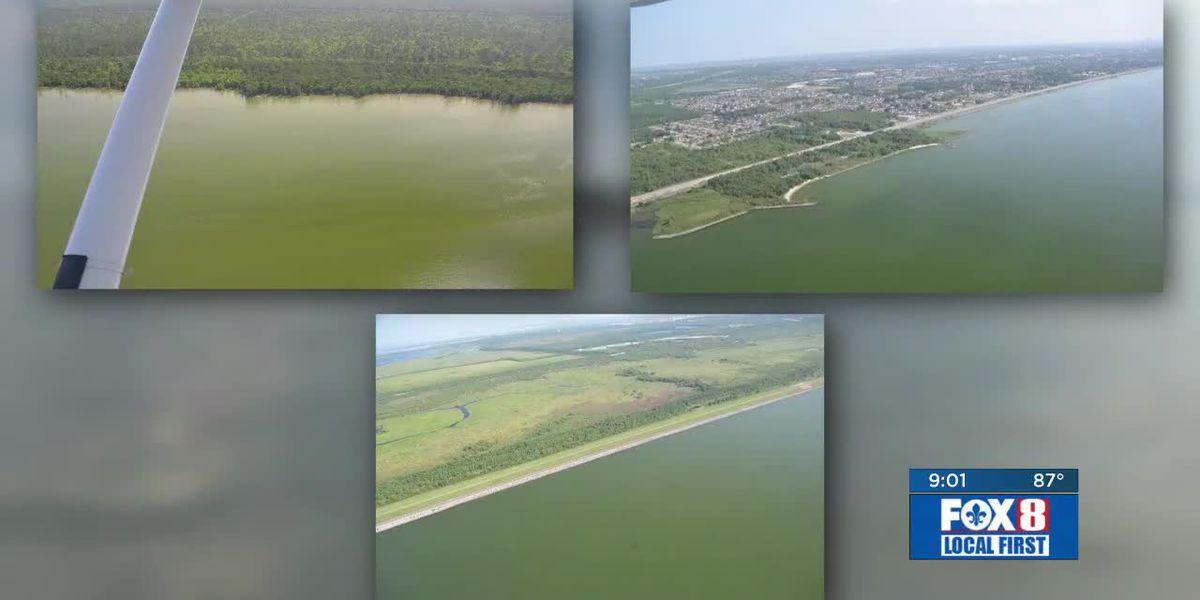 Experts working to determine if algae in Lake Pontchartrain is harmful