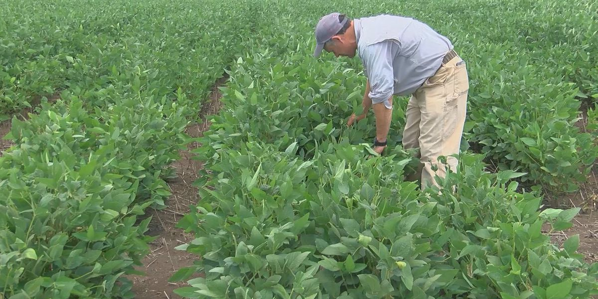USDA offering direct payments to farmers through Coronavirus Food Assistance Program