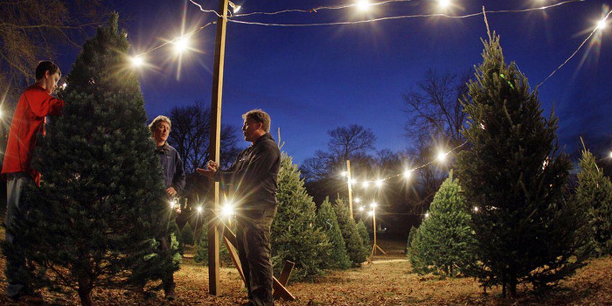coming soon on amazon real full sized christmas trees - Christmas Tree Lights Amazon