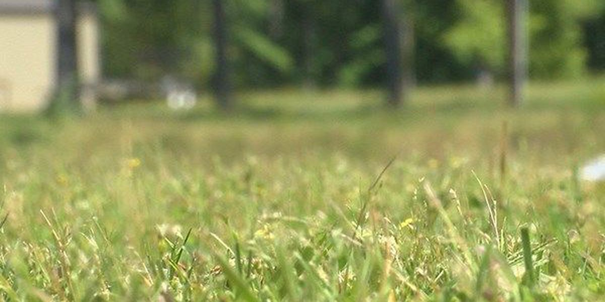 Gnats troubling some St. Francisville residents