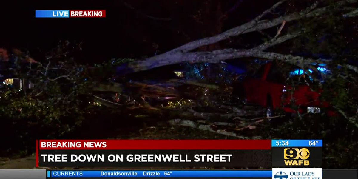 Large tree blocks Greenwell Street