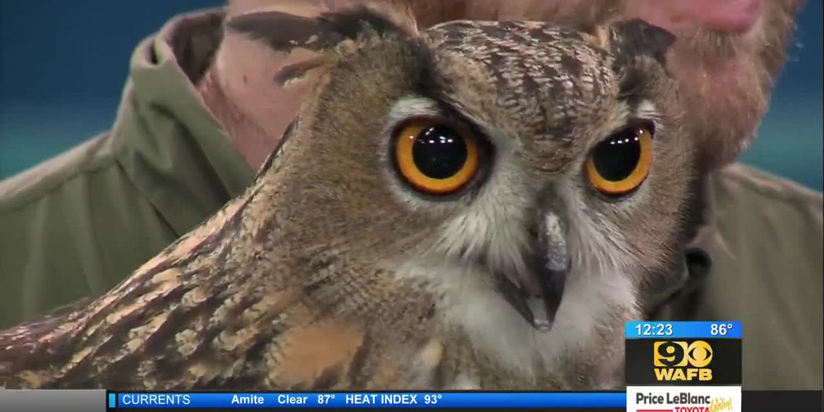 Special guests Henry The Owl and Armando The Armadillo from Barn Hill Preserve join 9News at Noon