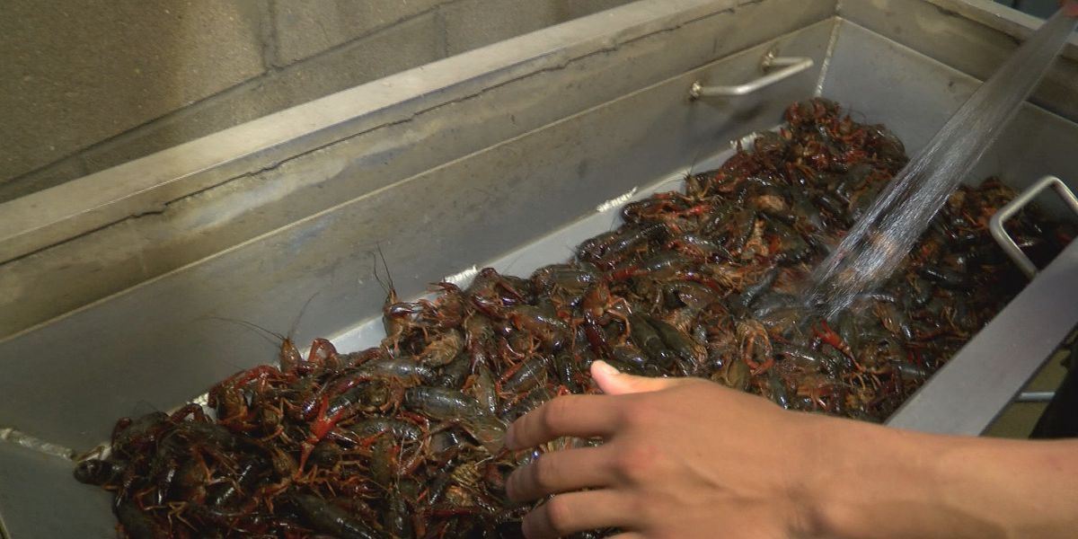 Help on the way for crawfish farmers suffering because of pandemic