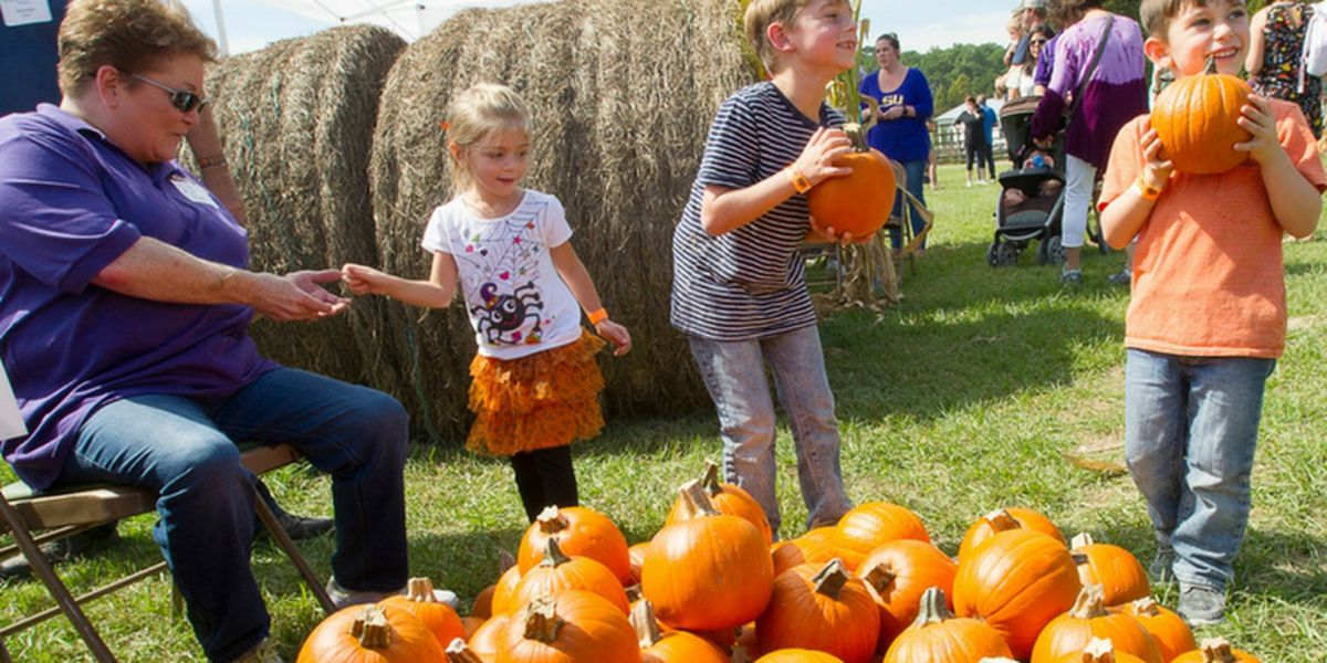 LSU AgCenter opens corn maze and 2019 fall activities