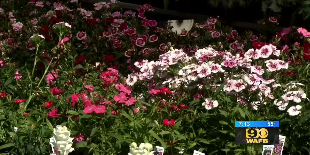 GET IT GROWING: Is it Time to Plant Pansies?