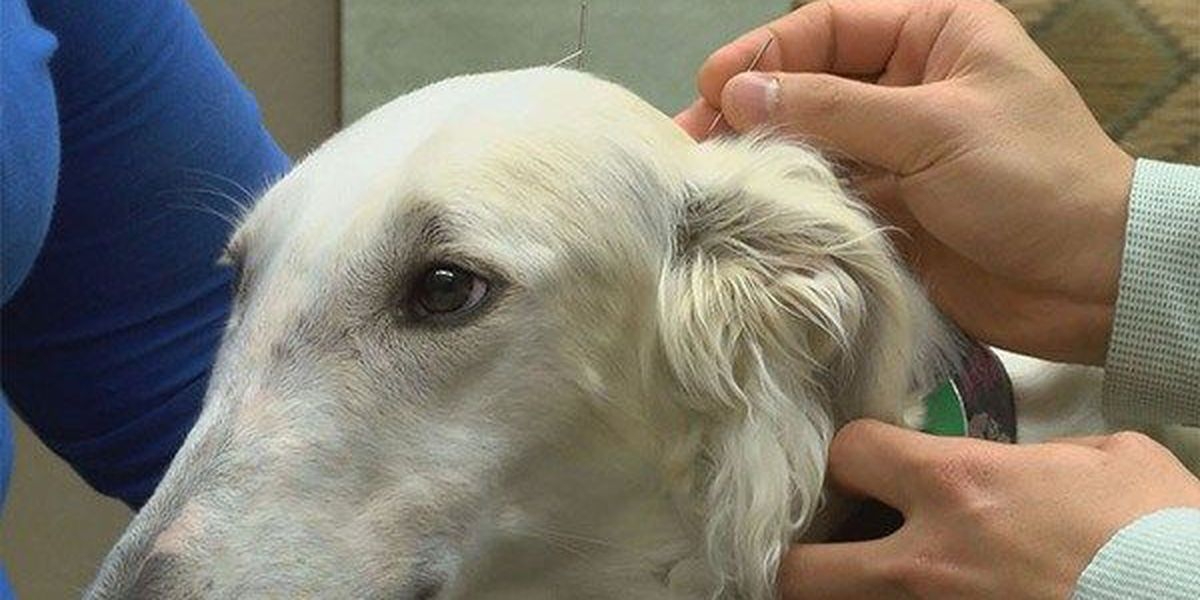 Healthline: Acupuncture for pets
