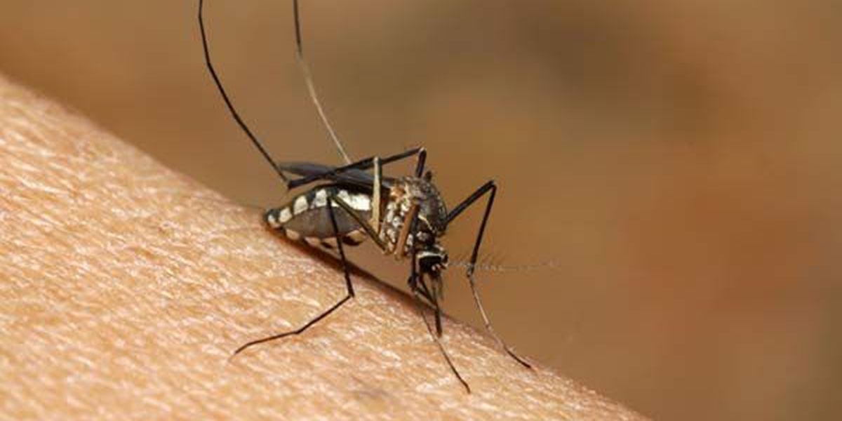 West Nile virus remains active in south Louisiana
