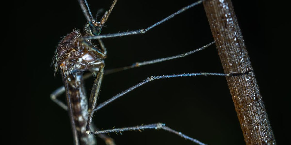 1st human case of West Nile virus found in Tennessee