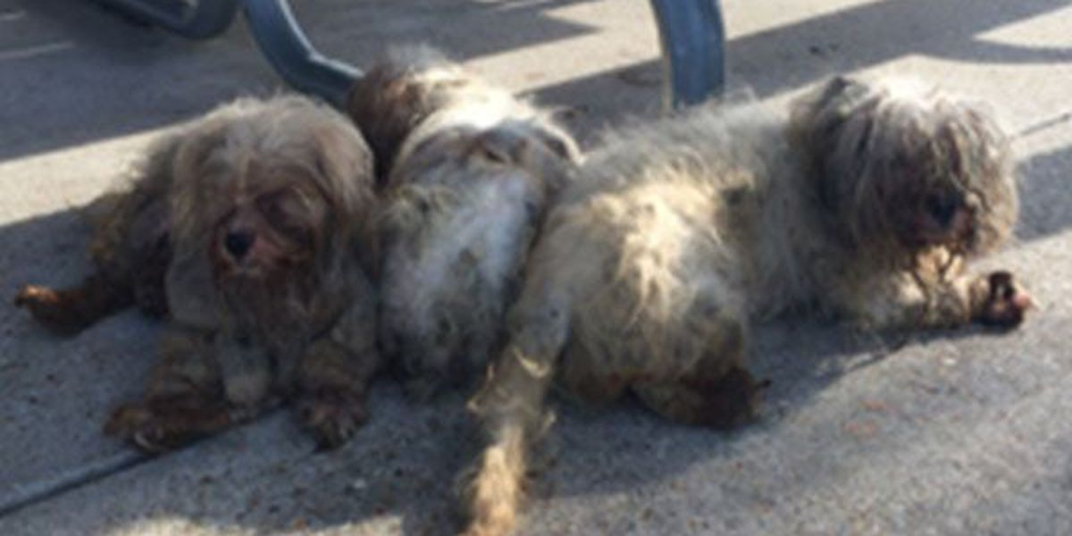 Dogs abandoned at soccer field, owner could face charges