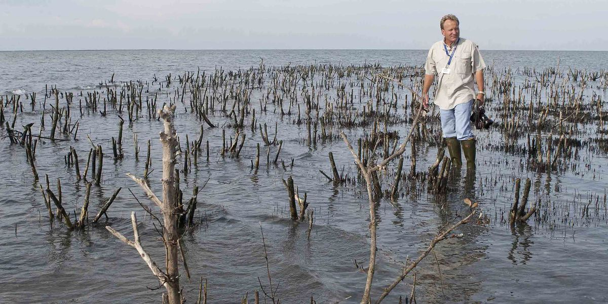 10 years after the Gulf of Mexico oil spill, a look back at lost islands
