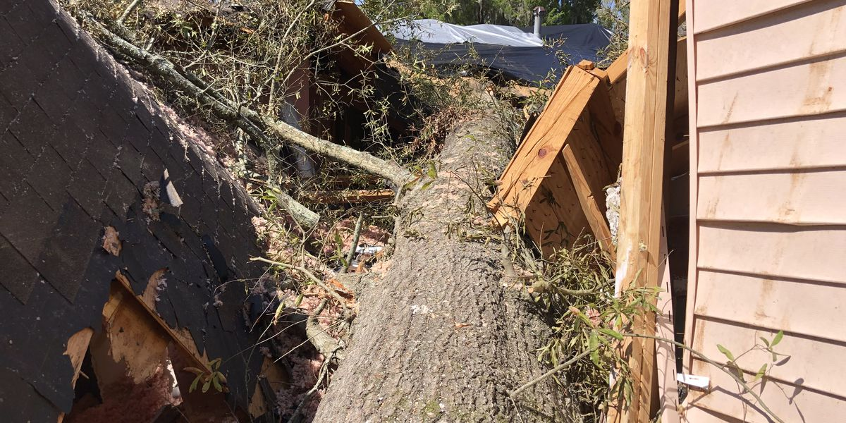 Father, daughter survive tree falling on top of them during Hurricane Delta