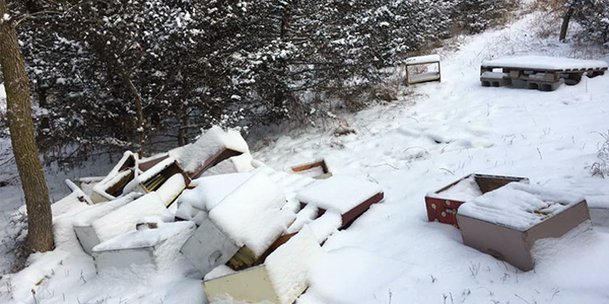 Vandals destroy 50 beehives in Iowa, killing at least 500,000 bees