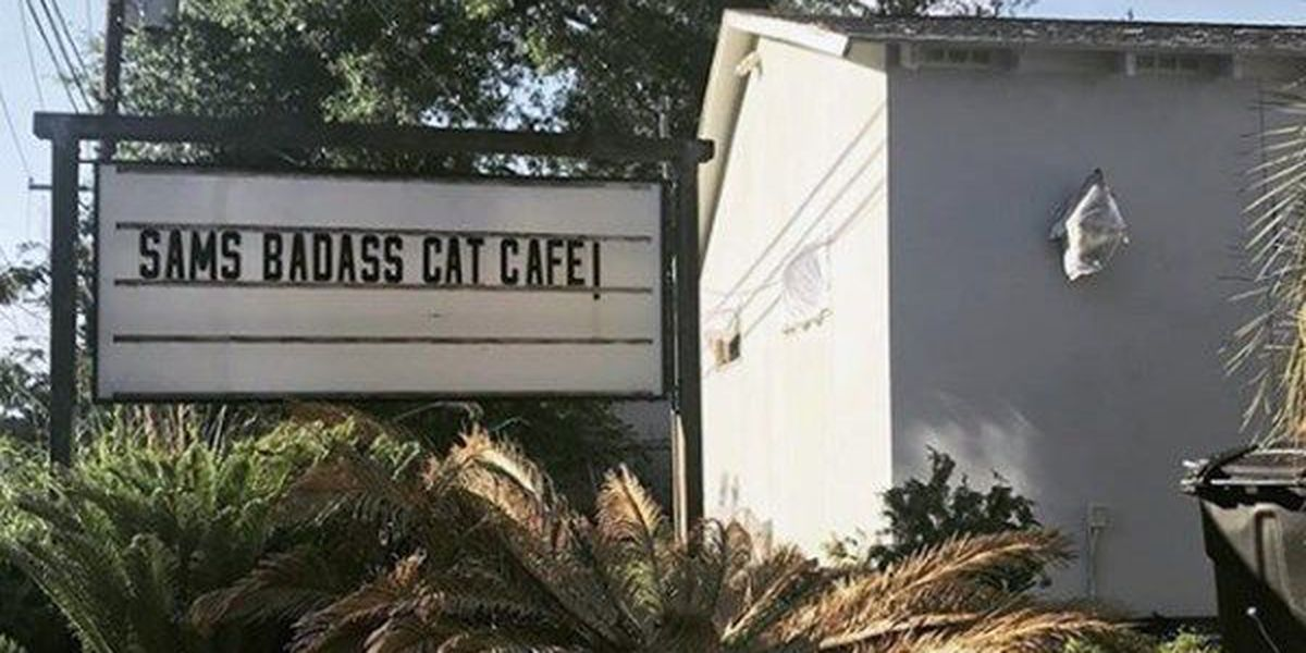 Cat cafe could be coming to Baton Rouge this fall