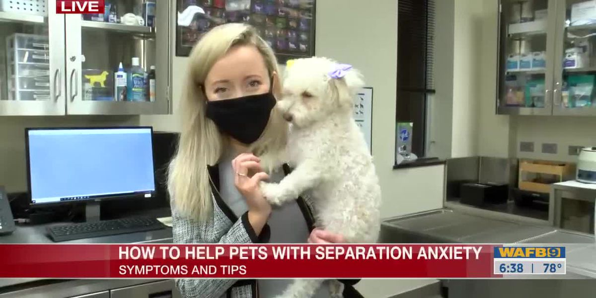 Tips with dealing with pets dealing with separation anxiety